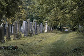 Almost untended cemetery section — Stock Photo