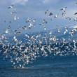 Flock of gulls — Stock Photo