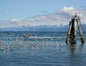 Flock of gulls with red boat — Stock Photo