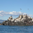 Gull Island in the sun — Stock Photo