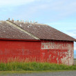 Seagulls on the roof of an old red building — Stock Photo