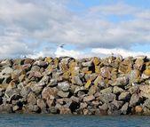 Gulls on the sea wall — Stock Photo