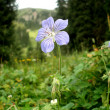 Stock Photo: Lone flower in middle of forest