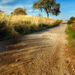 Stock Photo: Dirt road