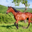 Stock Photo: Horse in green nature