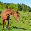 Horse in the green nature — Stock Photo