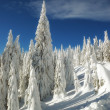 Stockfoto: Snowy trees - winter landscape