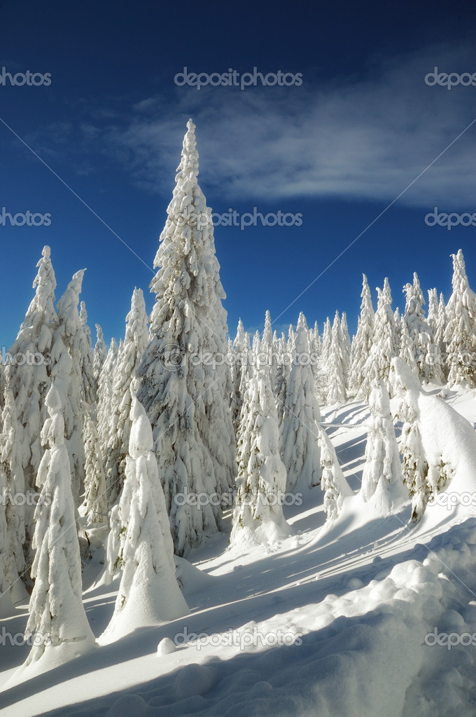 Snowy trees - winter landscape, Martinske hole - Slovakia — Stock Photo #6587083