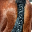 Entangled horse tail — Stock Photo