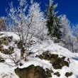 Snowy trees - winter landscape — Stock Photo