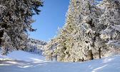 снежные деревья - зимний пейзаж — Стоковое фото
