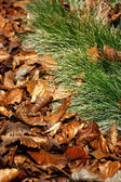 Fallen autumn leaves in the grass — Stock Photo