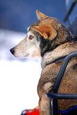 Injured young dog — ストック写真