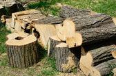 Sawn wood — Stock Photo