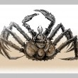 Постер, плакат: Hand draw of crab