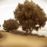 Landscape sepia — Stock Photo #6732393