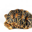 Close up of tortoise  — Stock Photo