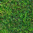 Green wall — Stock Photo #6546331