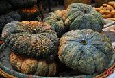 Pumpkins — Stock fotografie
