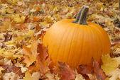 Podzimní dýňový — Stock fotografie