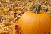Autumn Pumpkin — Stock Photo