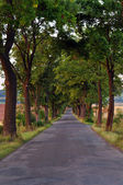 Trees at the Road — Stock Photo