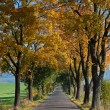 Stock Photo: Trees at Road