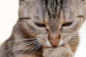 Close Up View of Cat — Stock Photo
