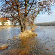 Flood in Czech — Stock Photo