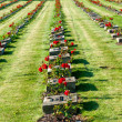 National Cemetery in Terezin — Stock Photo #6731488