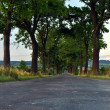Trees at the Road - Stock Photo