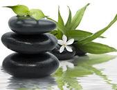 Su spa natürmort siyah taşlar ve bambu yaprakları — Stok fotoğraf