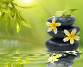 Spa still life, with yellow flowers on the black stones and bamb — Stock Photo