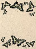 Paper Whit Butterflies — Stock Photo