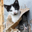 Stock Photo: Two funny homeless playful kitten