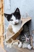 Two funny homeless playful kitten — Stock Photo