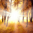 Stock Photo: Sunny autumn morning