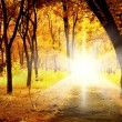 Stock Photo: Morning in autumn park