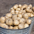 Two buckets with potatoes - Stock Photo