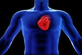Human heart x-ray concept — Stock Photo