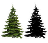 Ultra detailed Picea spruce tree with silhouette included — Stock Photo