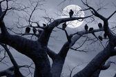 Spooky — Stock Photo