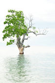 Sunken Tree — Stock Photo