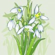 The blooming snowdrops. — Stock Vector
