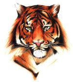 Tiger illustration — Foto de Stock