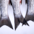 Stock Photo: Fish's tails