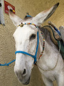 Donkey in a greek village — Foto de Stock