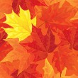 Autumn maple leaves — Grafika wektorowa