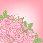 Pink roses — Stock Vector