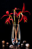 Red lilies and shells — Stock Photo